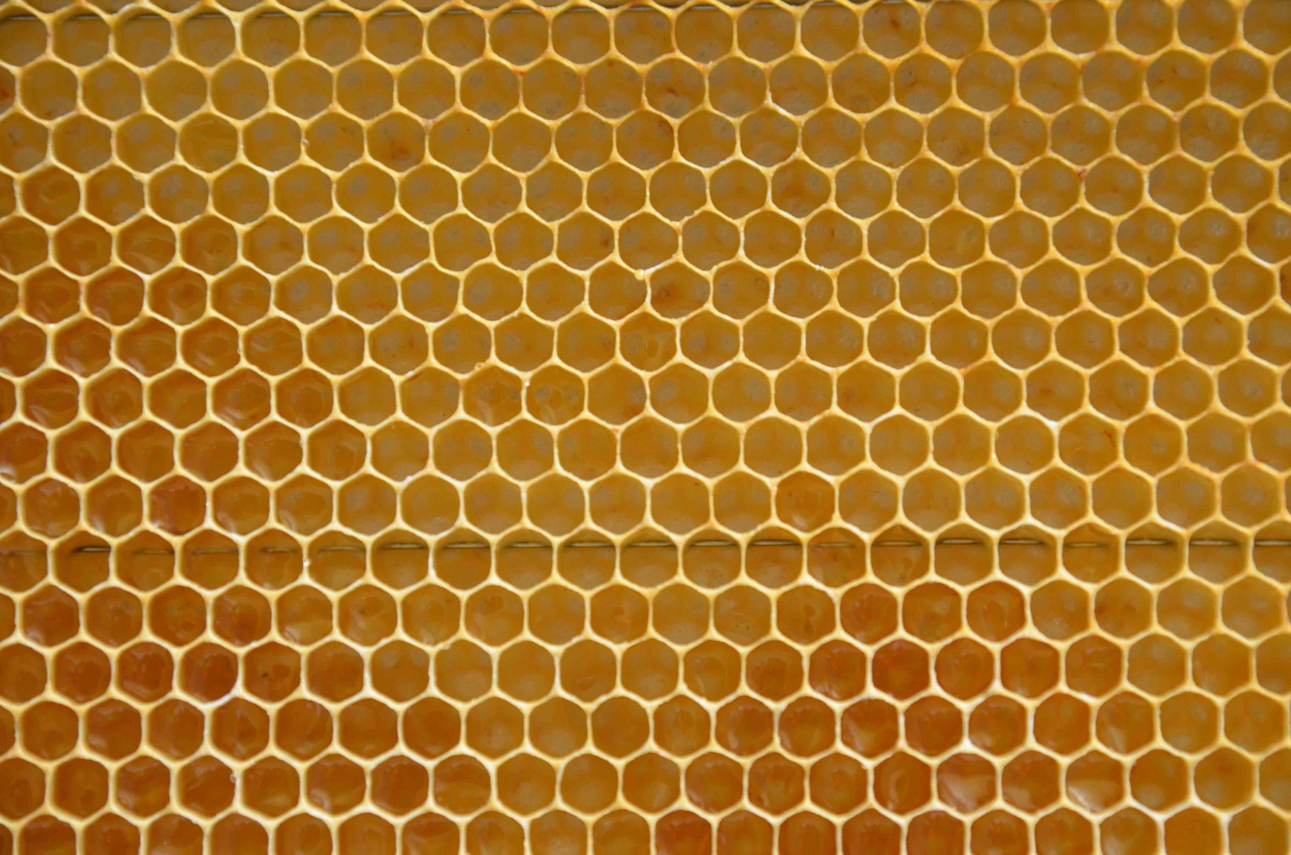 organic local cretan honey production in Crete